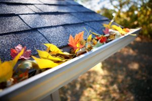 autumn leaves on rain gutter